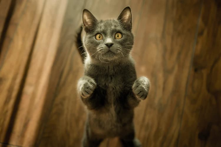 What Are the Symptoms of Parasites in Cats?